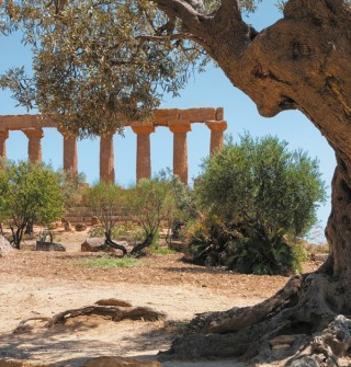 Olive oil legends and traditions in Ancient Greece