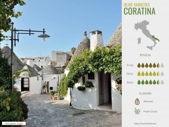 Olive variety_Coratina