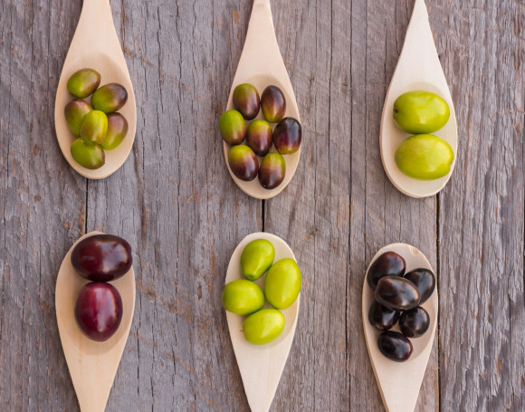A guide to the most common olive cultivars in Europe